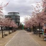 Der Zentralcampus der Universität im Frühling